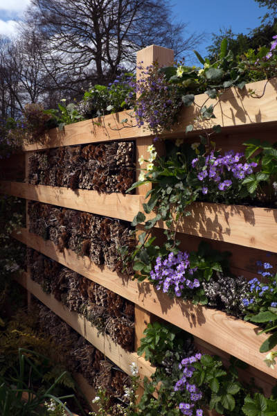 Wildlife fence planted with primroses, wild strawberries, birds-foot trefoil, forget-me-not, aubrieta, veronica and bug hotel made with bamboo and fir cones presented in reused flower pots.