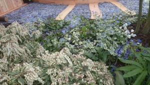 Pieris planting alongside slate path